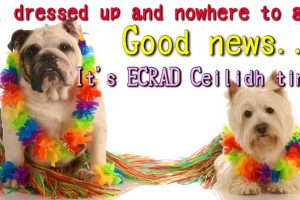 5307894 - dancing dogs - english bulldog and west highland white terrier dressed up as hula dancers